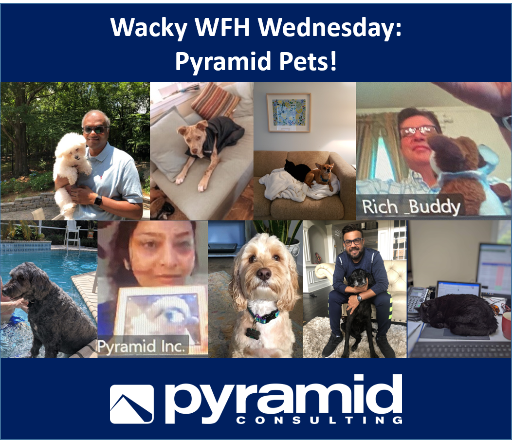 Wacky WFH Wednesday: Pyramid Pets